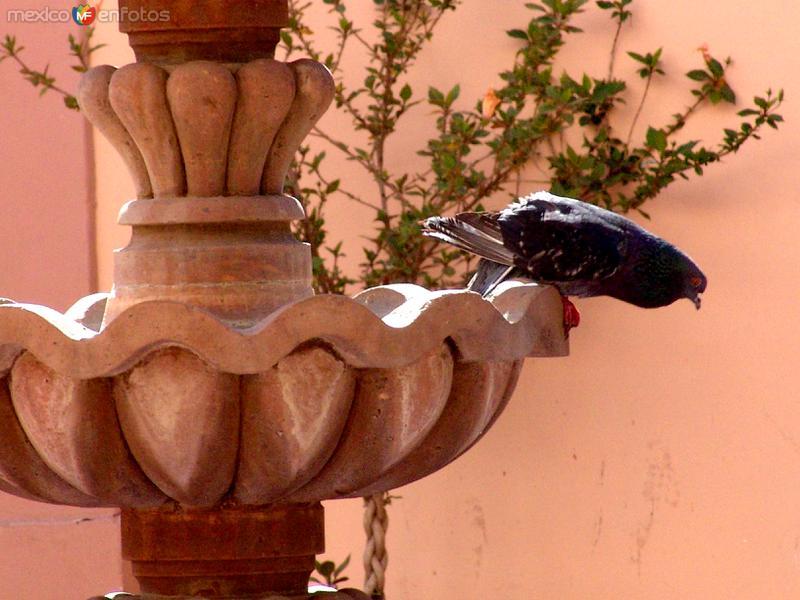Fuente y paloma