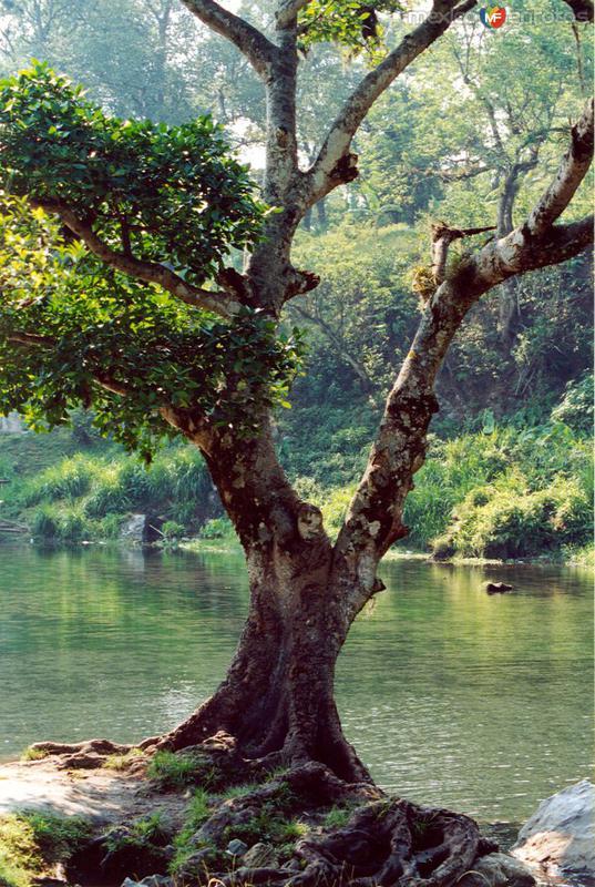 Fotos de Orizaba, Veracruz, M�xico: Laguna de los Sifones