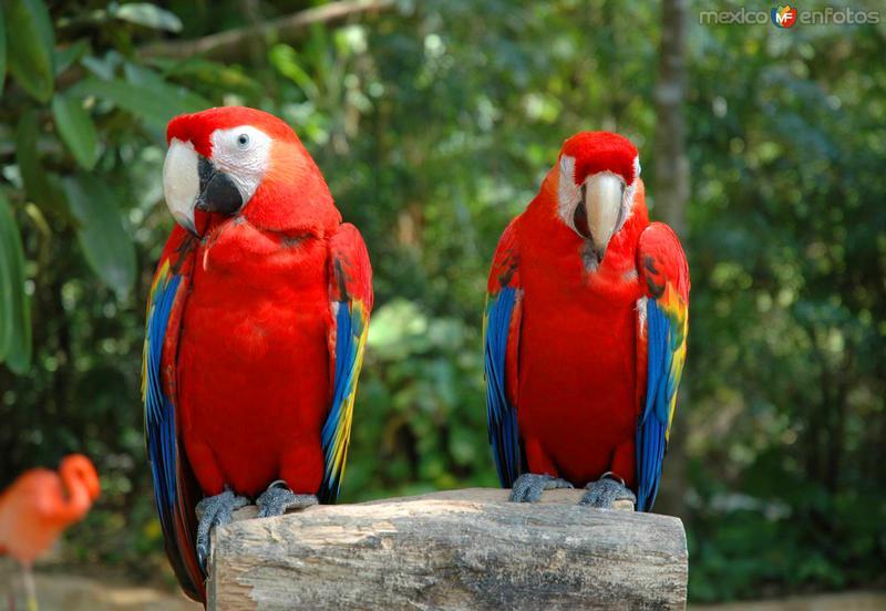 Guacamayas en el parque ecológico Xcaret