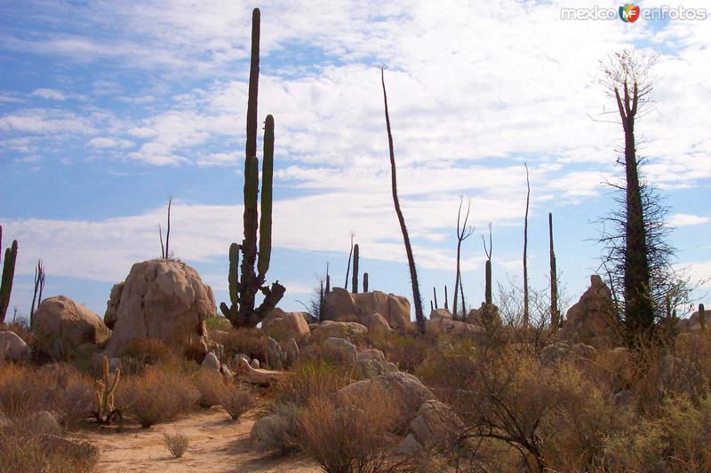 Desierto de Cataviña