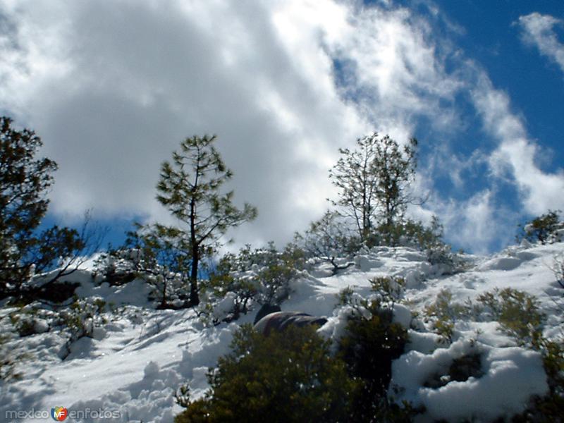 Fotos de Sisoguichi, Chihuahua, M�xico: Paisaje nevado en Sisoguichi
