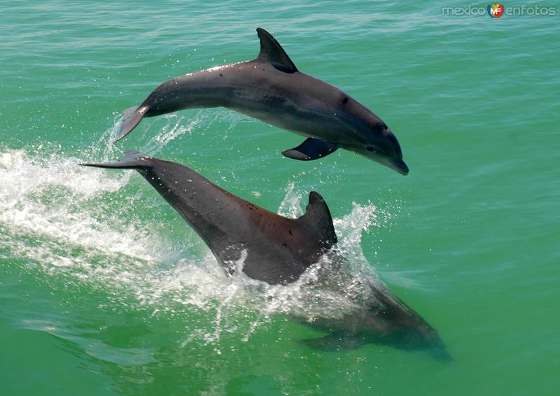 Delfines en la Laguna de Términos
