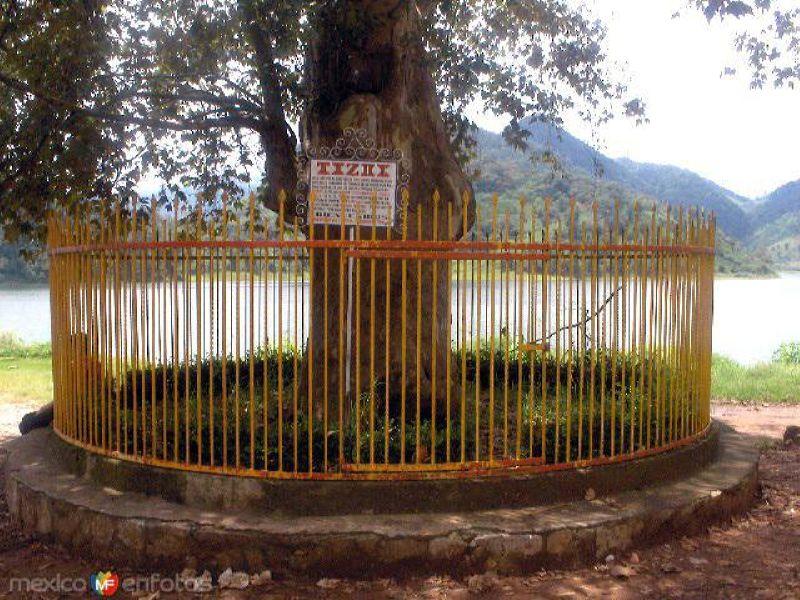 Árbol de la casa de Tizoc