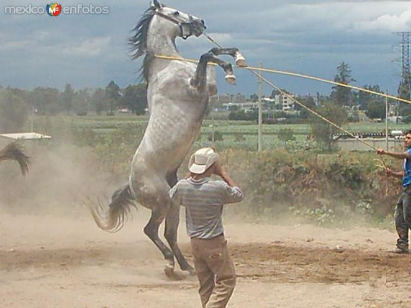 caballo de la feria de texcoco