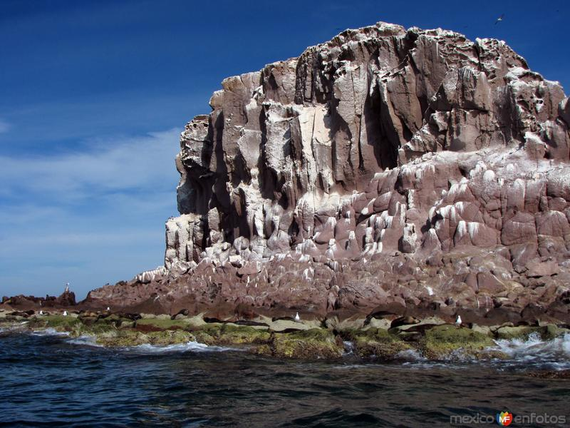 Fotos de Isla Espíritu Santo, Baja California Sur, México: Los Islotes
