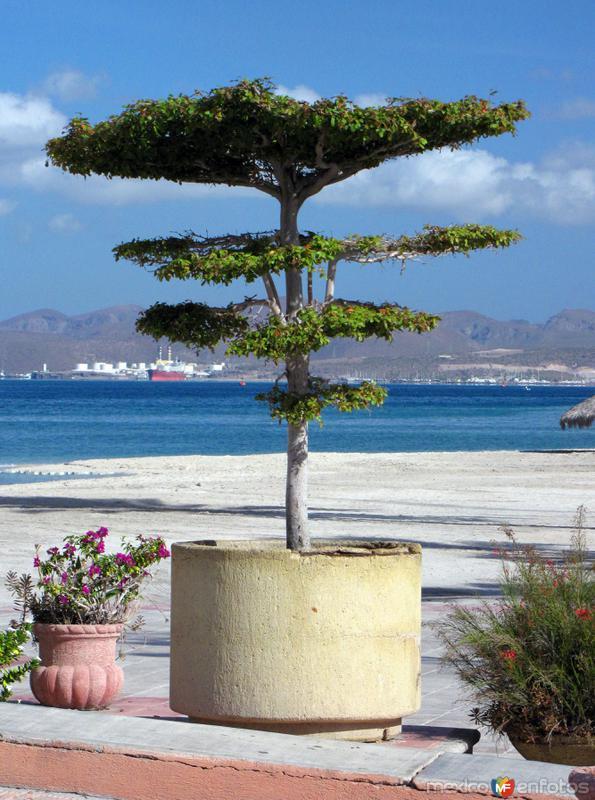 Flora de La Paz