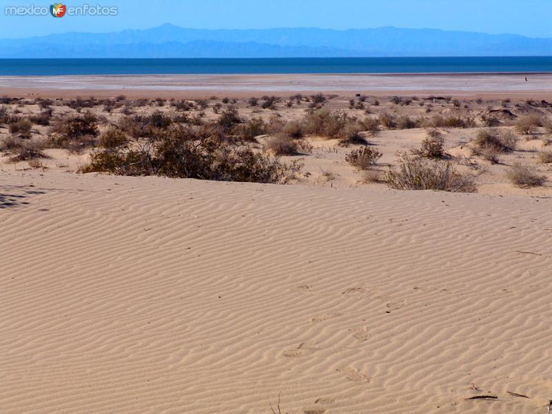 Fotos de Golfo de Santa Clara, Sonora, M�xico: Golfo de Santa Clara