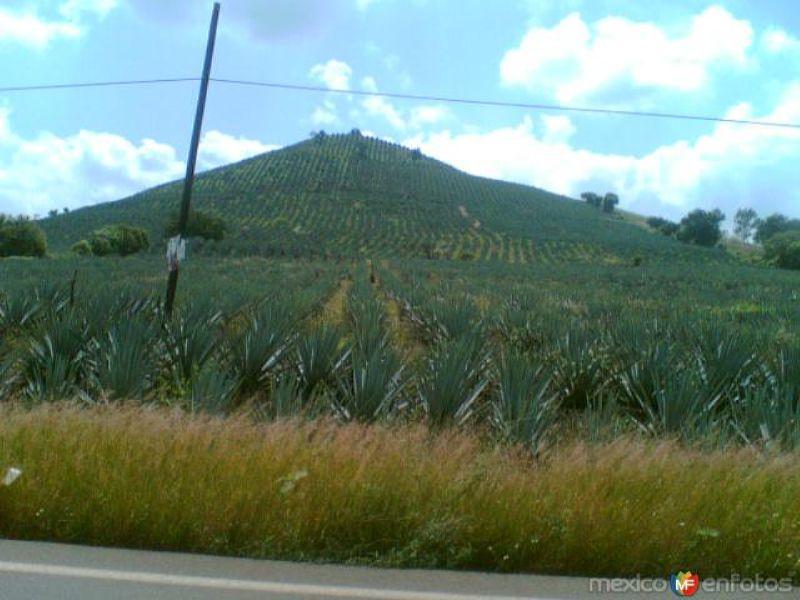 Fotos de Ayotlán Jalisco