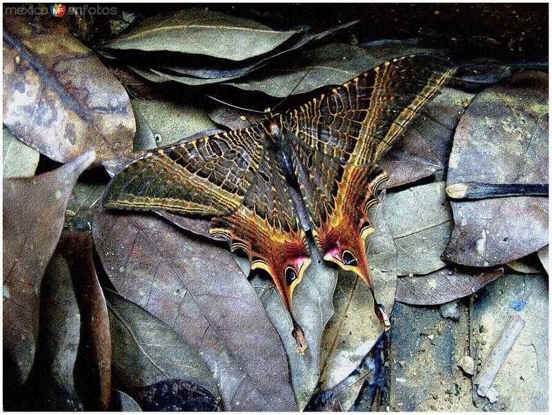 mariposa nocturna desconocida
