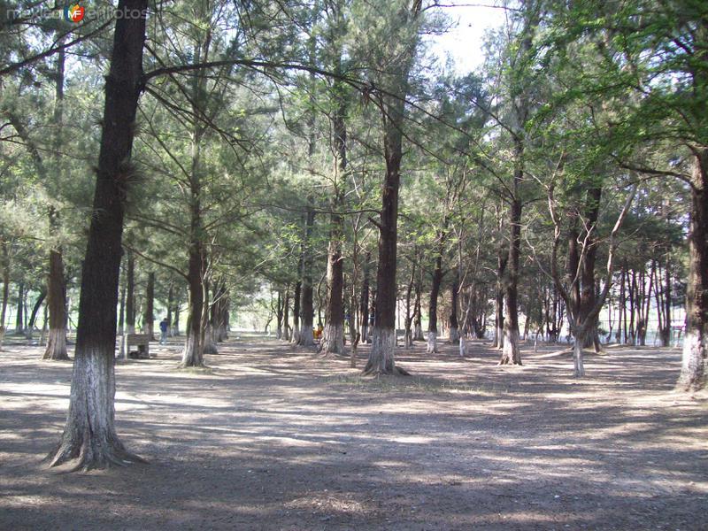 Bosque en San Sebastian Tecomaxtlahuaca