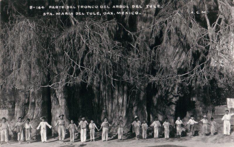 El árbol de Santa María del Tule