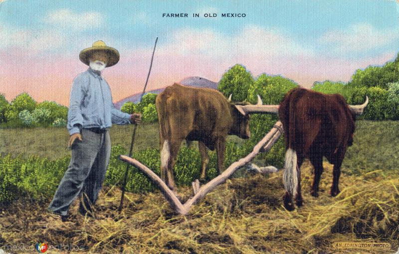 Campesino mexicano
