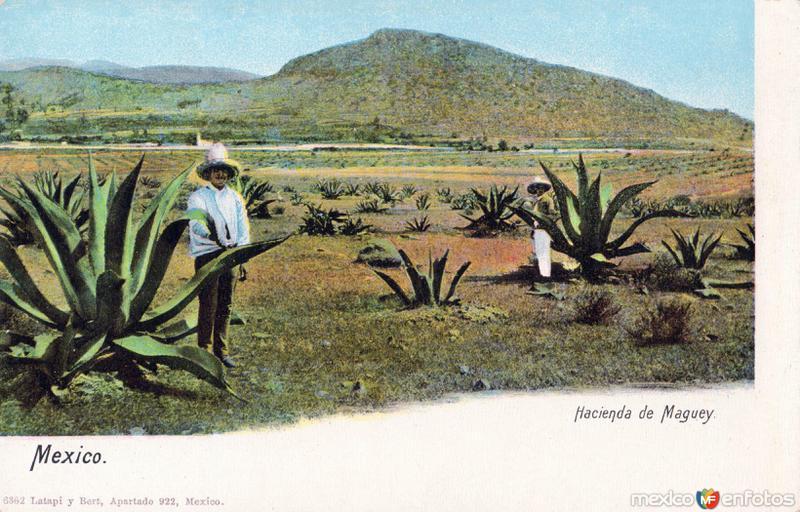 Hacienda de Maguey