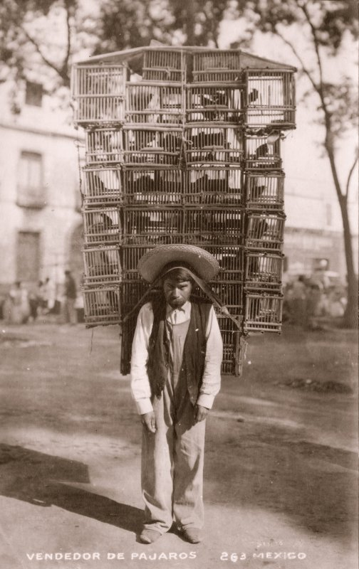 Vendedor de pájaros