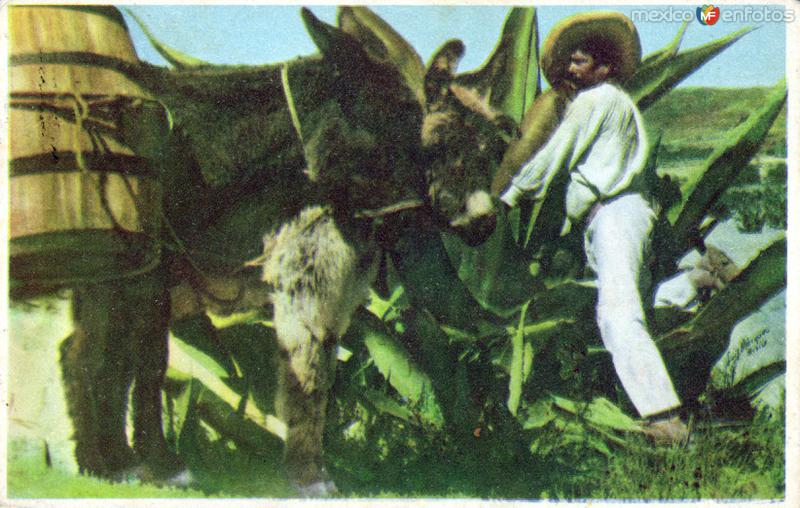 No. 66: Indio Típico Tlachiquero