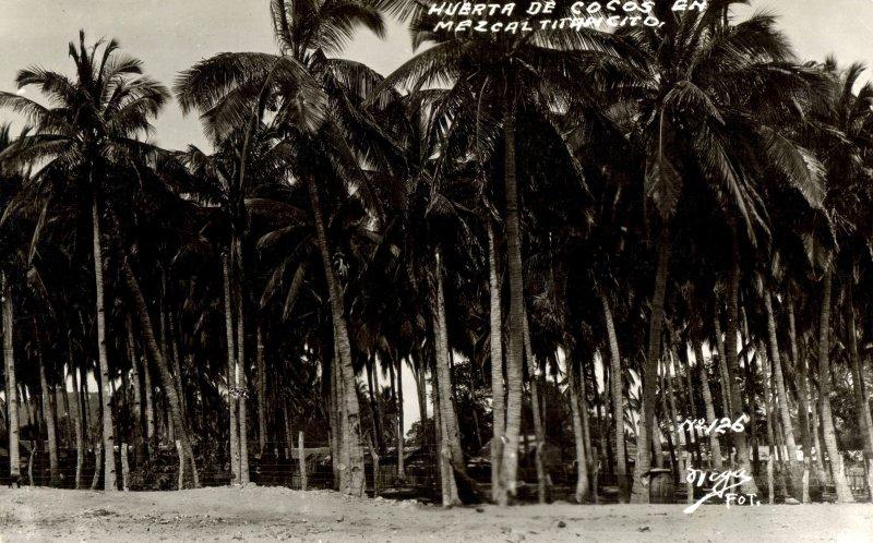 Huerta de cocos