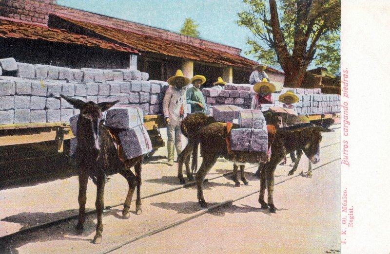 Burros cargando piedras