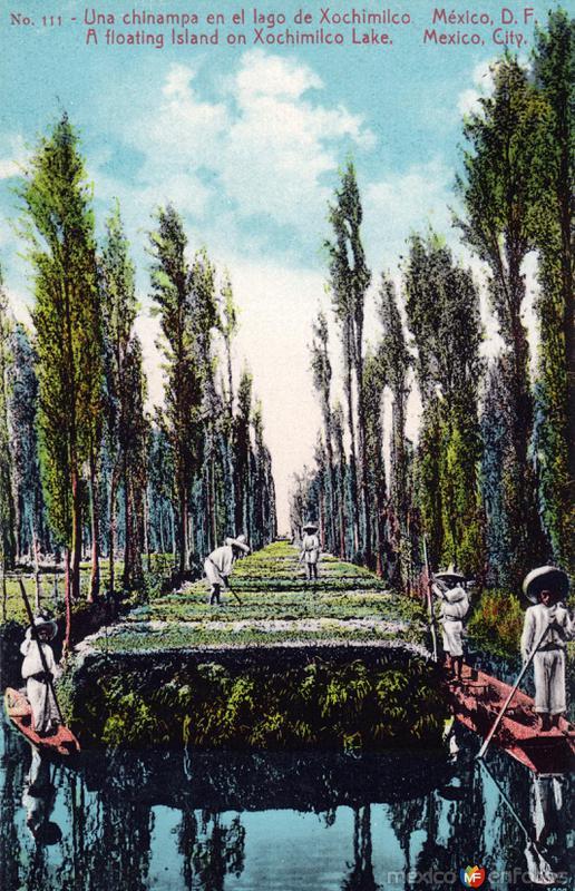 Una chinampa en el lago de Xochimilco