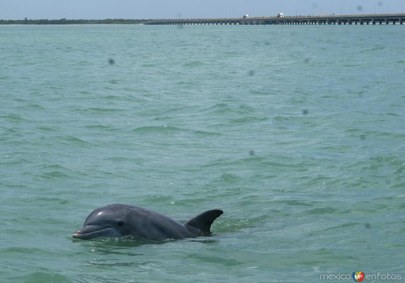 delfines en ciudad del carmen
