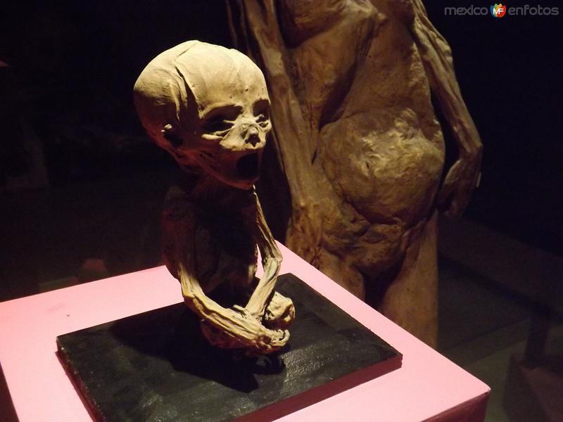 La momia mas pequeña del mundo. Guanajuato. Noviembre72012