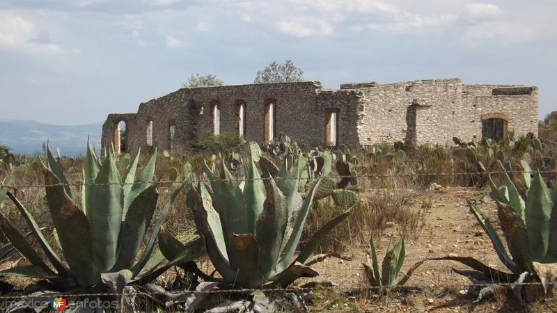 Entre los magueyes las ruinas del antiguo mineral de Pozos. Abril/2014