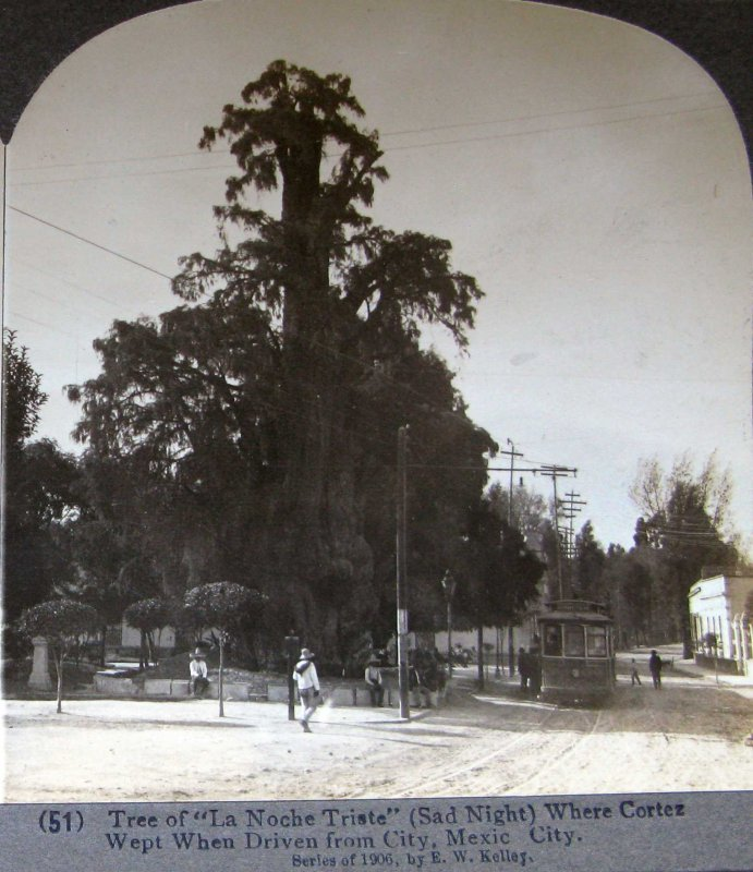 Arbol de la Noche Triste 1900