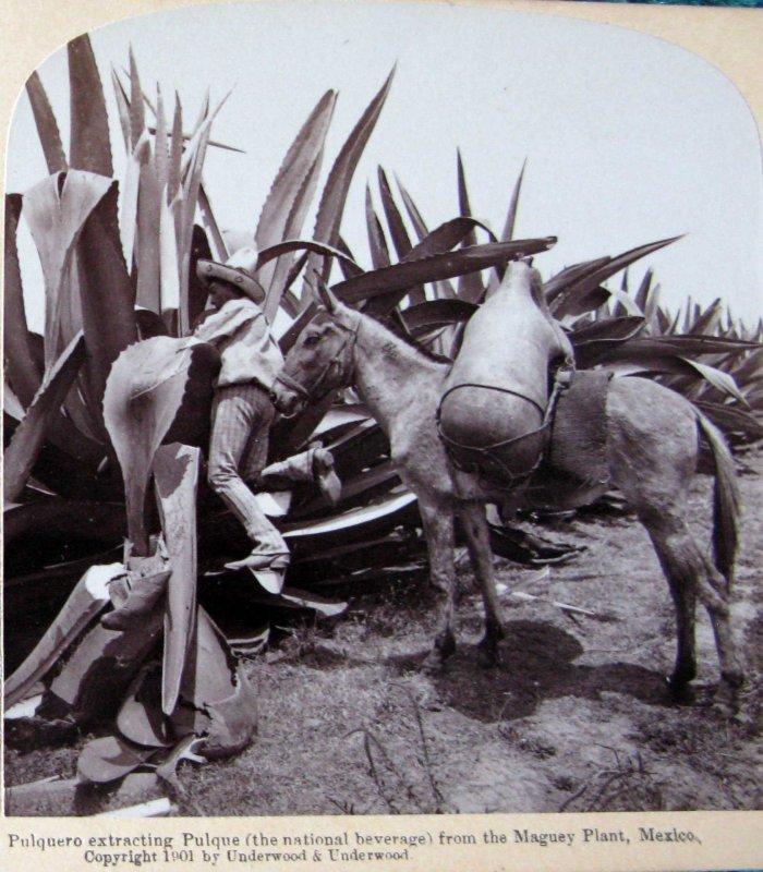 Extrayendo pulque Hacia 1900