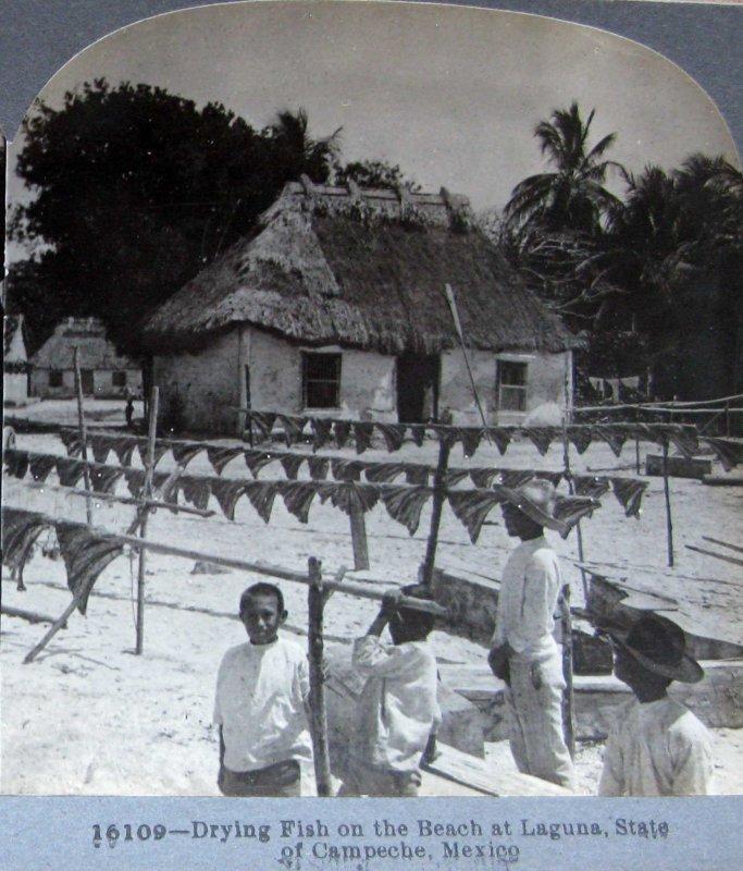 Secando Pescado Hacia 1900