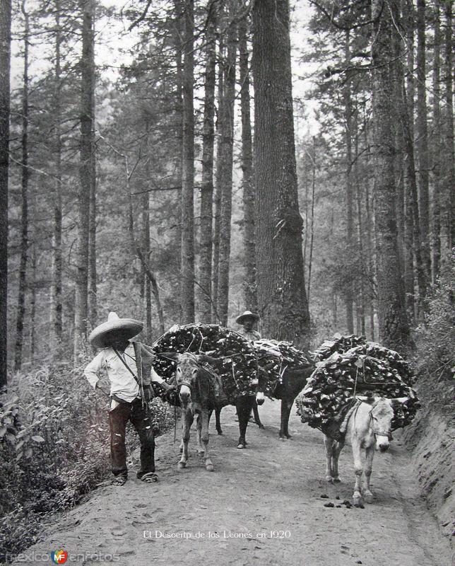 Desierto de los Leones por;HUGO BREHME Hacia 1930