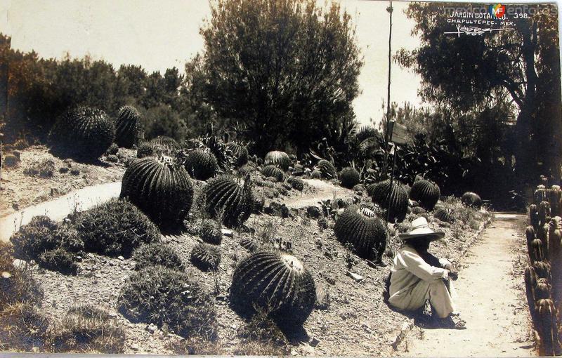 Jardin botanico en El Castillo de Chapultepec Hacia 1945