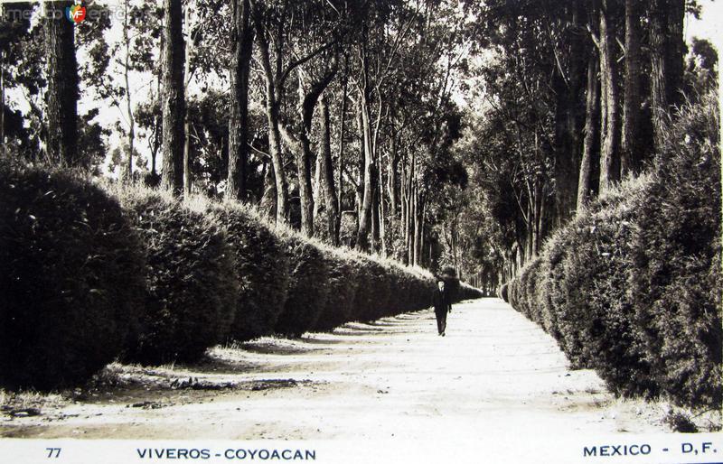 Viveros de Coyoacan Hacia 1945