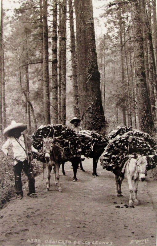 Desierto de los Leones Por el fotografo HUGO BREHME Hacia 1930
