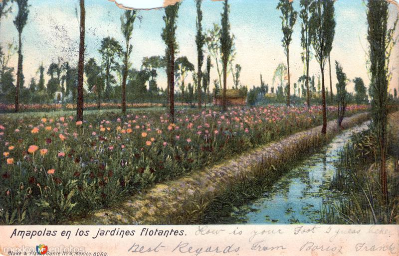 Amapolas en los jardines flotante de Xochimilco