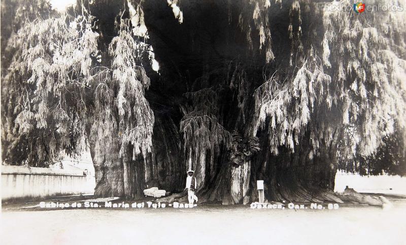EL ARBOL Hacia 1930