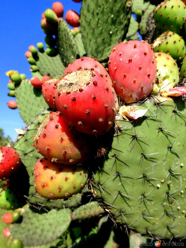 Flora de Teotihuacán