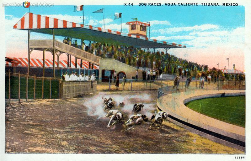 Carrera de perros en Agua Caliente