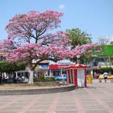 macuilis del parque independencia