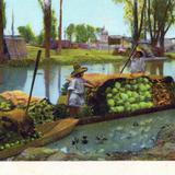 Mercado acu�tico en el Canal de la Viga