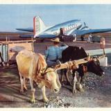 Carreta de bueyes y avi�n de American Airlines