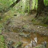 Arroyo de montaña, Presa La Estanzuela.