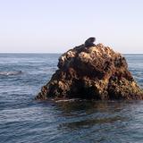 lobo marino