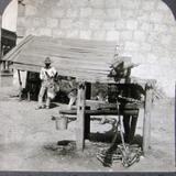 Extrayendo el Jugo de Cana Hacia 1900
