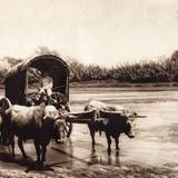 Carro t�pico cruzando el R�o Atoyac (circa 1920)