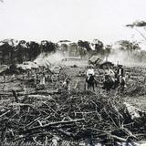 PLANTACION DEL CAUCHO Hacia 1900