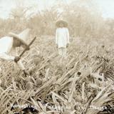 TIPOS MEXICANOS cosechadores de Pina Hacia 1914