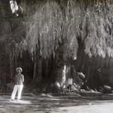 EL ARBOL Circa 1930-1950