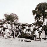 REVOLUCIONARIOS MATANDO UNA RES PARA SUBSISTIR Circa 1914- 1920