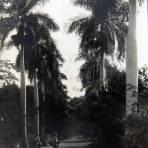 LAS PALMAS Circa 1930-1950