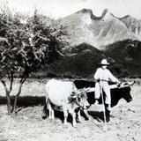 TIPOS MEXICANOS ADOLECENTE YUNTERO Circa 1930-1950