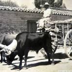 TIPOS MEXICANOS Vendedoras de lena circa 1930-1950